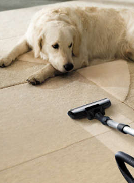 green clean carpet cleaning deal Clean Green Carpet Cleaning   3 Rooms for only $49!