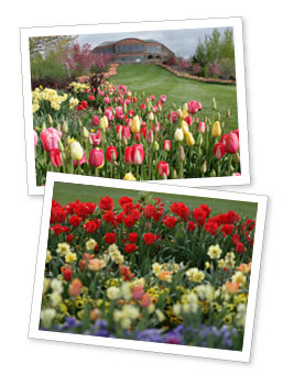 Thanksgiving Point Tulip Festival Giveaway Quick Utah Giveaway:  4 Tickets to Thanksgiving Points Tulip Festival!
