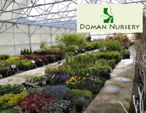 DealDragonDomanNursery 300x232 Doman Nursery in Springville: $20 Gift Certificate for $10!